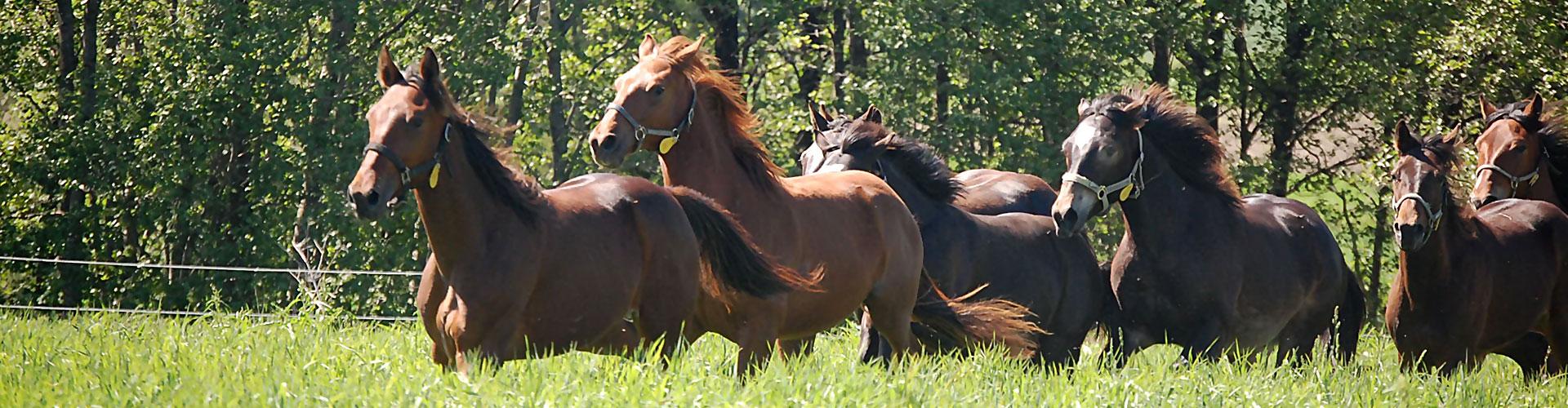 Hestene i full fart på beite