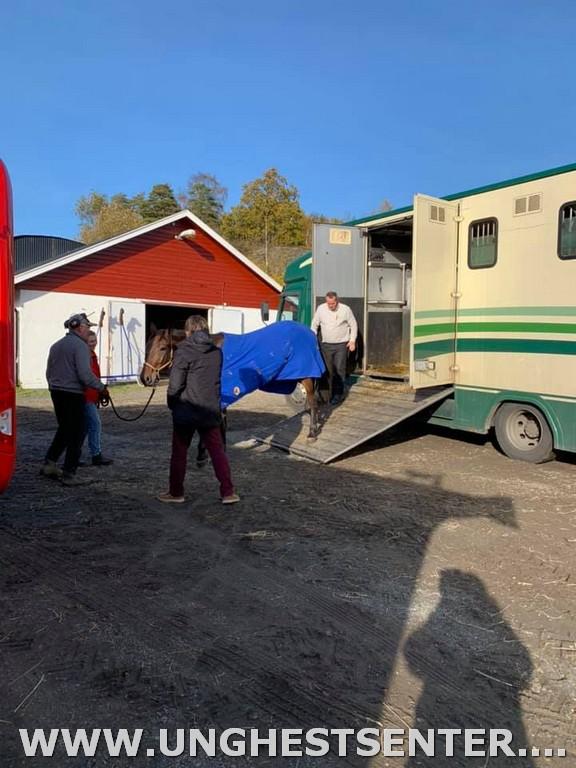 Frantz Praem og Anette kommer med sine hester fra danmark