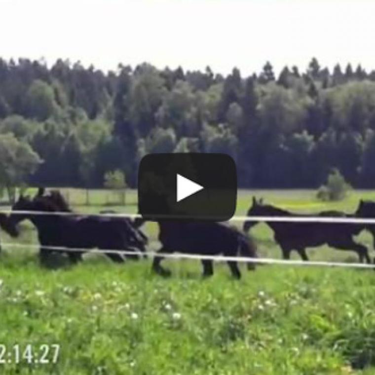 Video-2012
