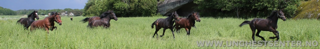Hestene koser seg på det flotte grønne beitet