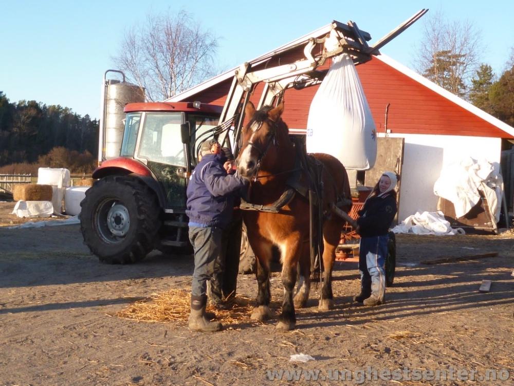 Agda er traktor for en dag.