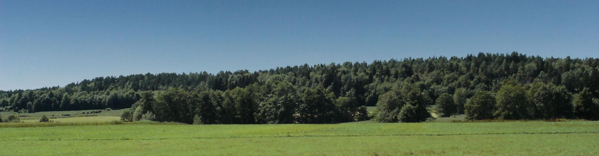 Landskapet på gården